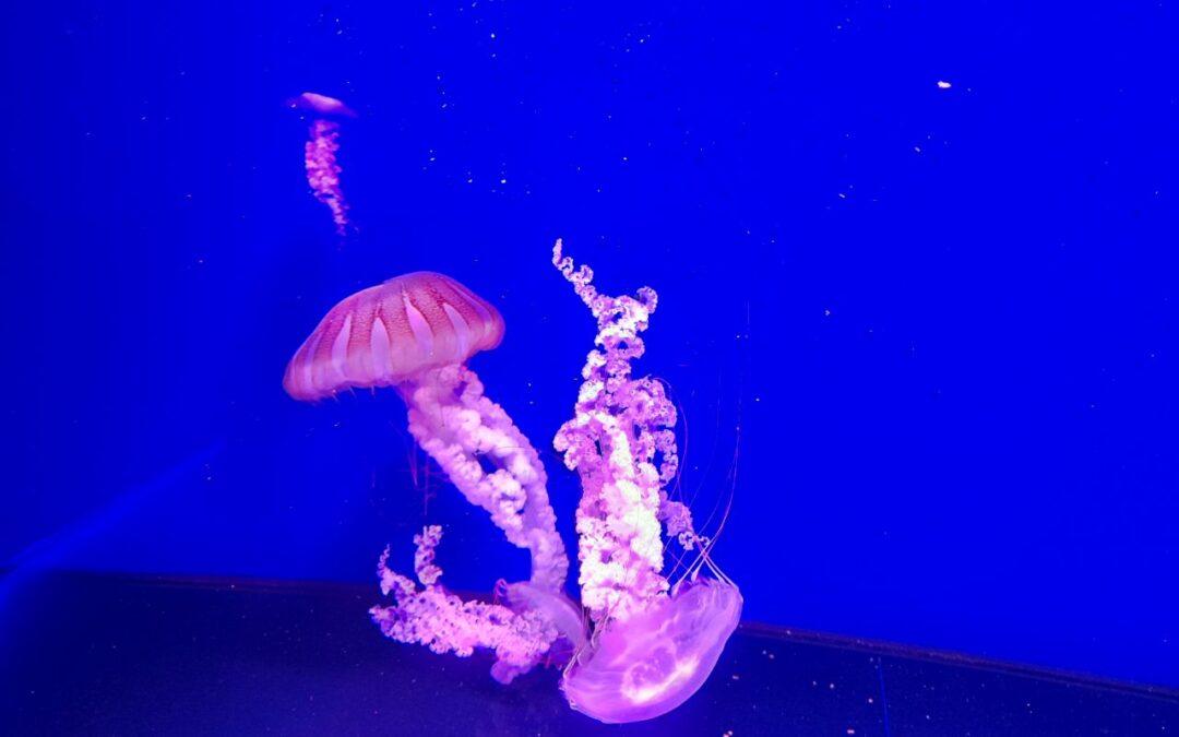Медузи в музеї